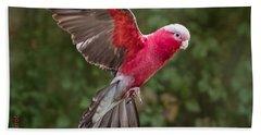 Australian Galah Parrot In Flight Beach Towel