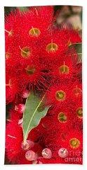 Australian Red Eucalyptus Flowers Beach Sheet by Joy Watson