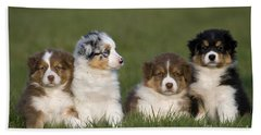 Australian Shepherd Puppies Beach Towel