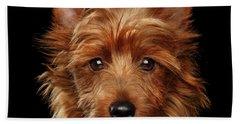 Australian Terrier Beach Sheet by Sergey Taran