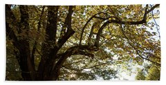 Autumn Branches Beach Sheet