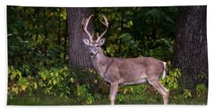 Beach Towel featuring the photograph Autumn Buck by Andrea Silies