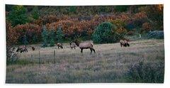 Autumn Bull Elk Beach Sheet by Jason Coward