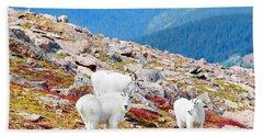 Autumn Goats On Mount Bierstadt Beach Towel