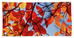 Autumn In The Arboretum Beach Towel