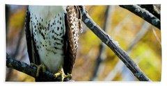 Autumn Red-tailed Hawk Beach Sheet