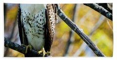 Autumn Red-tailed Hawk Beach Sheet by Ricky L Jones