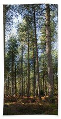 Autumn Tranquil Forest Beach Sheet