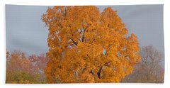 Beach Towel featuring the photograph Autumn Tree by Donald C Morgan