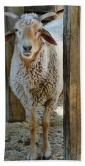 Awassi Sheep Beach Towel