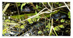 Beach Towel featuring the photograph Baby Alligator 001 by Chris Mercer