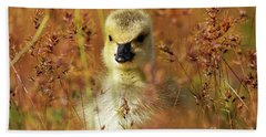 Beach Towel featuring the photograph Baby Cuteness - Young Canada Goose by Sue Harper