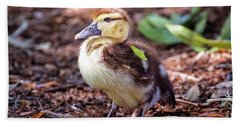 Baby Duck Sitting Beach Sheet by Stephanie Hayes