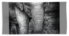 Baby Elephant 1 Beach Sheet by Charuhas Images