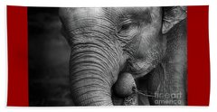 Baby Elephant Close Up Beach Sheet by Charuhas Images