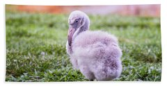 Baby Flamingo Sitting Beach Sheet