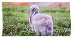 Baby Flamingo Sitting Beach Sheet