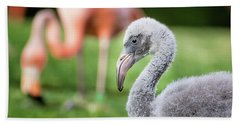 Baby Flamingo With Mom In Background Beach Sheet by Stephanie Hayes