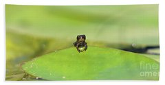 Baby Frog On Lily Pad 8967 Beach Towel