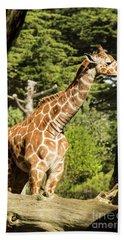 Baby Giraffe 2 Beach Sheet