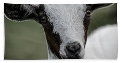 Beach Towel featuring the photograph Baby Goat by Donna Lee