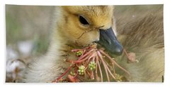 Beach Towel featuring the photograph Baby Gosling Collecting Flowers by Sue Harper
