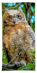 Baby Great Horned Owl Beach Sheet