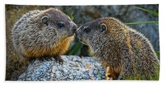 Baby Groundhogs Kissing Beach Towel by Bob Orsillo