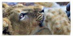 Baby Lion Beach Towel by Steve McKinzie