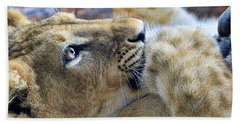 Baby Lion Beach Sheet by Steve McKinzie