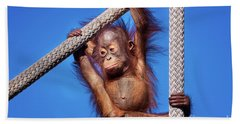 Baby Orangutan Hanging Out Beach Sheet by Stephanie Hayes