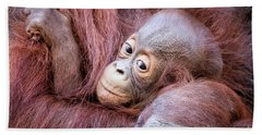 Baby Orangutan Beach Towel by Stephanie Hayes