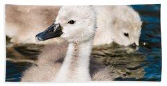 Baby Swan Close Up Beach Towel