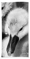 Baby Swan Headshot Beach Sheet