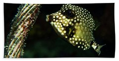 Beach Towel featuring the photograph Baby Trunk Fish by Jean Noren