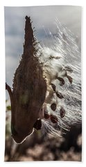 Back Lit Milkweed Pod Beach Towel