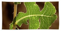 Beach Towel featuring the photograph Back Side Light On A Leaf At Sunset by Yoel Koskas