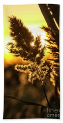 Beach Sheet featuring the photograph Backlit By The Sunset by Zawhaus Photography