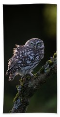 Backlit Little Owl Beach Towel