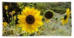 Backlit Sunflower Aka Helianthus Beach Towel by Sue Smith