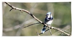 Backyard Blue Jay Beach Towel