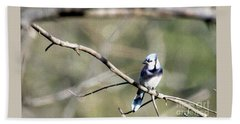 Backyard Blue Jay Oil Beach Towel