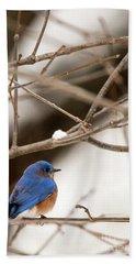 Backyard Bluebird Beach Towel