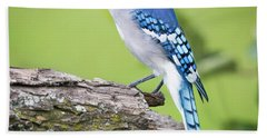 Bald Blue Jay- It Must Be August Beach Towel by Ricky L Jones