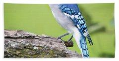 Bald Blue Jay- It Must Be August Beach Sheet by Ricky L Jones