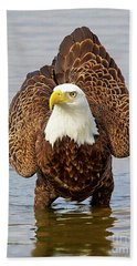 Bald Eagle Portrait Beach Sheet