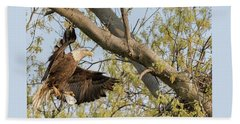 Bald Eagle Catch Of The Day  Beach Towel