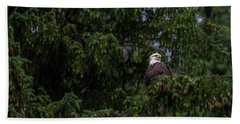 Bald Eagle In The Tree Beach Towel by Timothy Latta