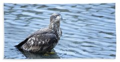 Bald Eagle Juvenile Beach Towel