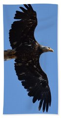 Bald Eagle Juvenile Soaring Beach Towel